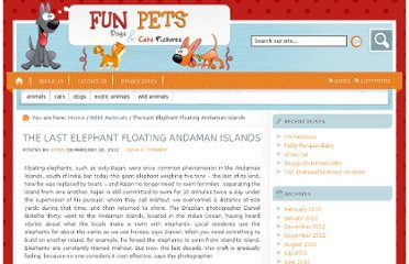 http://www.fun-pets.com/the-last-elephant-floating-andaman-islands/