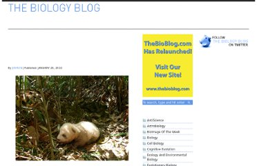 http://archived.thebioblog.com/2010/01/inbreeding-in-panda-population-extremely-rare-brown-and-white-panda-spotted/