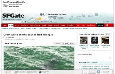 http://www.sfgate.com/science/article/Great-white-sharks-back-in-Red-Triangle-3885260.php#photo-3489859