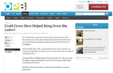 http://www.opb.org/news/article/could-crows-have-helped-bring-down-bin-laden/