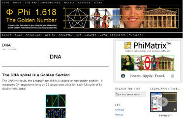 http://www.goldennumber.net/dna/