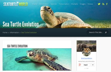 http://www.seaturtle-world.com/sea-turtle-evolution.html