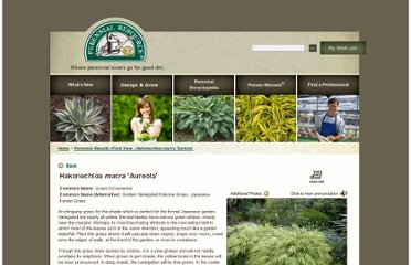 http://www.perennialresource.com/plants/ornamental-grasses-sedges-rushes/920_hakonechloa-macra-aureola.aspx