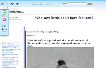 http://www.binscorner.com/pages/w/who-says-birds-dont-have-feelings.html