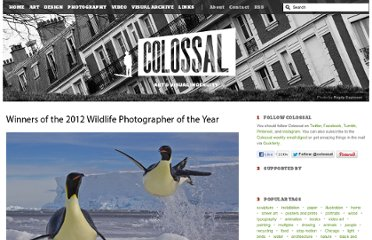 http://www.thisiscolossal.com/2012/10/winners-of-the-2012-wildlife-photographer-of-the-year/