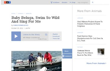 http://www.npr.org/2012/10/23/163471645/baby-beluga-swim-so-wild-and-sing-for-me