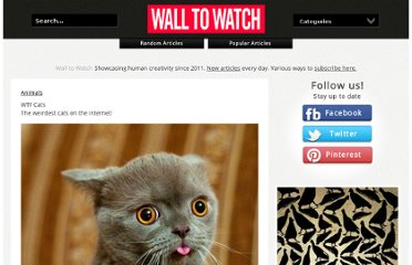 http://www.walltowatch.com/view/8587/WTF+Cats