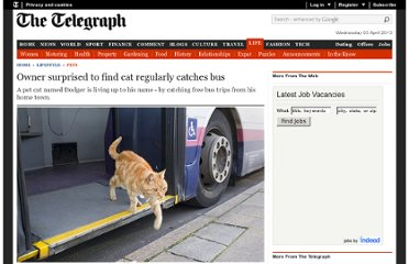http://www.telegraph.co.uk/lifestyle/pets/8958012/Owner-surprised-to-find-cat-regularly-catches-bus.html