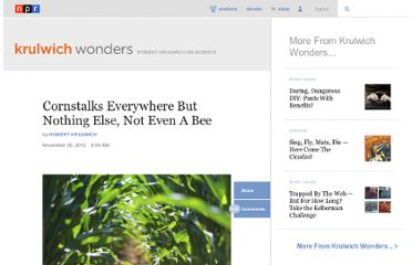 http://www.npr.org/blogs/krulwich/2012/11/29/166156242/cornstalks-everywhere-but-nothing-else-not-even-a-bee