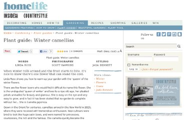 http://www.homelife.com.au/gardening/plant+guides/plant+guide+winter+camellias,4975