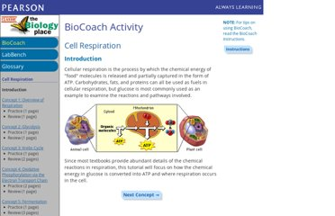 http://www.phschool.com/science/biology_place/biocoach/cellresp/intro.html
