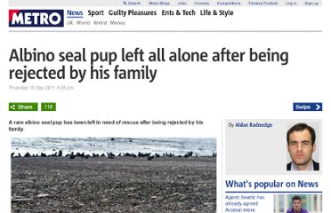 http://metro.co.uk/2011/09/15/albino-seal-pup-left-all-alone-after-being-rejected-by-his-family-151758/