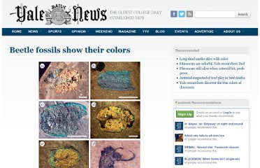 http://yaledailynews.com/blog/2011/10/11/beetle-fossils-show-their-colors/