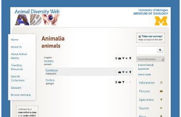 http://animaldiversity.ummz.umich.edu/accounts/Animalia/classification/