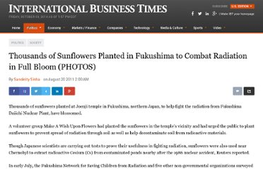 http://www.ibtimes.com//thousands-sunflowers-planted-fukushima-combat-radiation-full-bloom-photos-708210