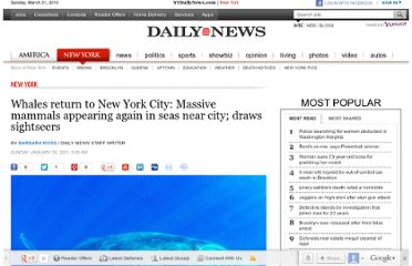 http://www.nydailynews.com/new-york/whales-return-new-york-city-massive-mammals-appearing-seas-city-draws-sightseers-article-1.154513
