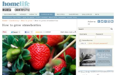 http://www.homelife.com.au/gardening/how+to+grow/how+to+grow+strawberries,5437