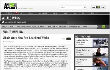 http://animal.discovery.com/tv-shows/whale-wars/about-whaling/sea-shepherd.htm