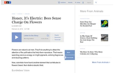 http://www.npr.org/2013/02/22/172611866/honey-its-electric-bees-sense-charge-on-flowers