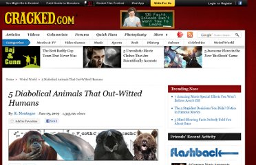 http://www.cracked.com/article_17453_5-diabolical-animals-that-out-witted-humans.html