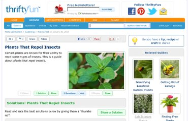 http://www.thriftyfun.com/Plants-That-Repel-Insects-1.html