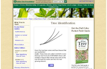 http://www.arborday.org/trees/whattree/whattree.cfm?itemid=e6a