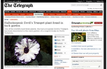 http://www.telegraph.co.uk/gardening/7982925/Hallucinogenic-Devils-Trumpet-plant-found-in-back-garden.html