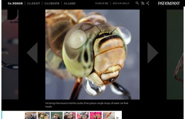 http://www.fastcodesign.com/1672420/mesmerizing-photos-of-insects-wearing-hats-made-of-water#2