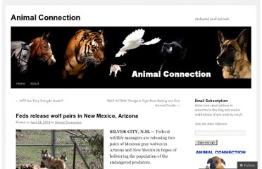 http://animalconnectionac.wordpress.com/2013/04/28/feds-release-wolf-pairs-in-new-mexico-arizona/