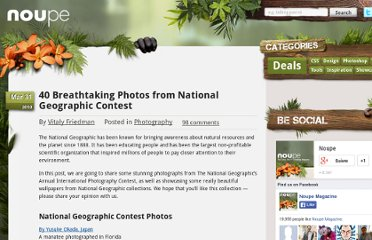 http://www.noupe.com/photography/40-breathtaking-photos-from-national-geographic-contest.html