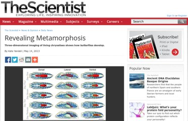http://www.the-scientist.com/?articles.view/articleNo/35556/title/Revealing-Metamorphosis/