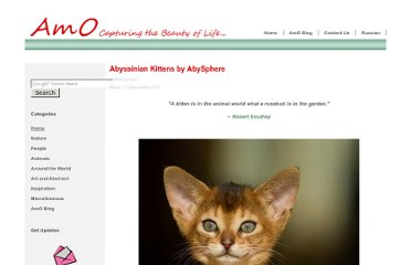http://amolife.com/image/animals/abyssinian-kittens-by-abysphere.html