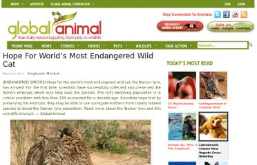 http://www.globalanimal.org/2013/03/29/hope-for-worlds-most-endangered-wild-cat/93959/