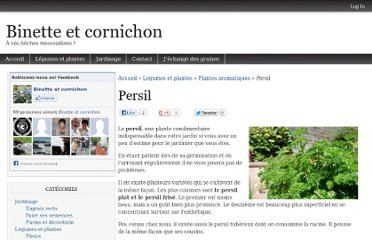 Persil l gumes pearltrees - Comment semer du persil ...