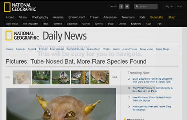 http://news.nationalgeographic.com/news/2010/10/photogalleries/101006-papua-new-guinea-species-tube-nosed-bat-science-animal-pictures/
