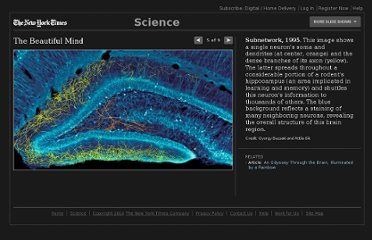 http://www.nytimes.com/slideshow/2010/11/29/science/20101130-brain-5.html?scp=4&sq=neuron&st=cse