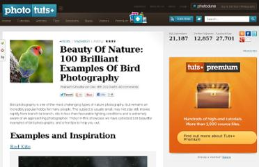 http://photo.tutsplus.com/articles/inspiration/bird-photography/