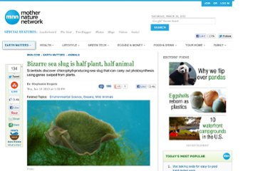 http://www.mnn.com/earth-matters/animals/stories/bizarre-sea-slug-is-half-plant-half-animal-0