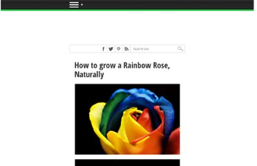 http://www.pickchur.com/2010/05/how-to-grow-a-rainbow-rose-naturally/