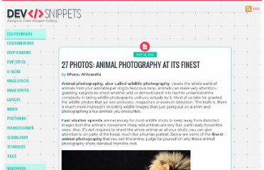 http://devsnippets.com/article/animal-photography-at-its-finest.html